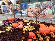 Na podzimní Floru láká i instalace na Horním náměstí v Olomouci