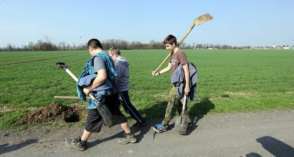 Litovelští školácí sází alej podél cesty od Litovle k Šargounu
