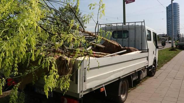 Spomocí evropských dotací se  nyní začínají vracet stromy do ulice Lipenské i na třídu Kosmonautů v Olomouci