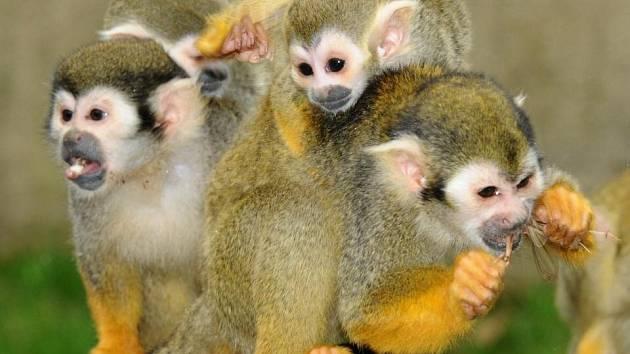 Kotulové v olomoucké zoo