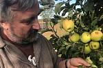 Sklizeň v sadech ve Vilémově 2019. Tak špatná úroda ovoce jako letos tam ještě nebyla. Co nepobily kroupy, to během července a srpna zlikvidovaly vosy
