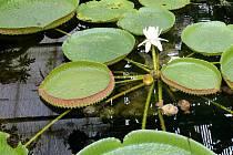 Sbírkové skleníky na výstavišti Flora