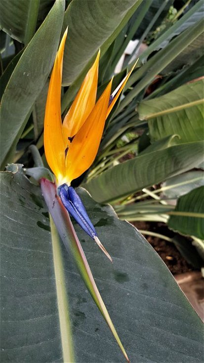Sbírkové skleníky na olomouckém výstavišti Flora
