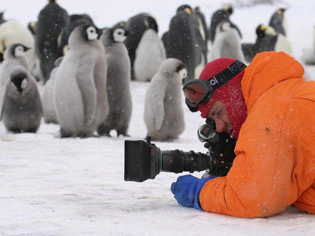 Doprovodný program na olomouckém Horním náměstí dnes zahájí projekce dokumentu režiséra Luca Jacqueta Putování tučňáků.