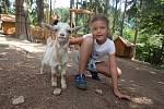 Králikovství v olomoucké zoo