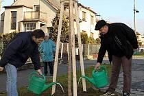 Sázení nových stromů v Grygově