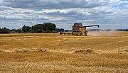 Pasecká zemědělská společnost sklízí ječmen u obce Mladějovice.