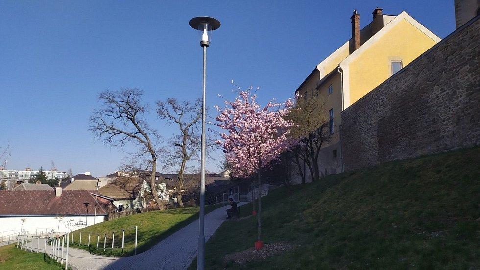 Jaro v Mohelnici. 8. dubna 2020