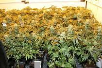 Policisté odhalili během září pěstírnu marihuany v bytě na Dolním náměstí v Olomouci.