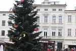 Strom na náměstí Svobody ve Frýdku-Místku.