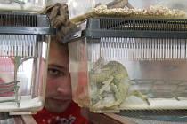 Akvarijní a terarijní burza Aquatera na Výstavišti Flora v Olomouci