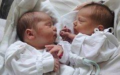 Lili a Maxim Hudcovi, Olomouc, narozeni 15. prosince v Olomouci, míra 49 cm a 47 cm, váha 3280 g a 2680 g.