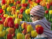 Olomoucké záhony tulipánů