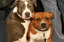 Hanácká národní výstav psů na olomouckém výstavišti.