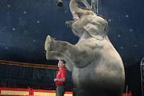 Přijel Národní Cirkus Originál Berousek