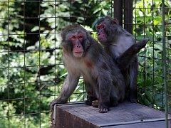 Nově otevřený opravený výběh makaků.