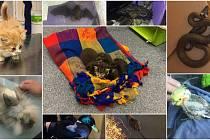 Zvířata odchycená v roce 2019 Městskou policií Olomouc