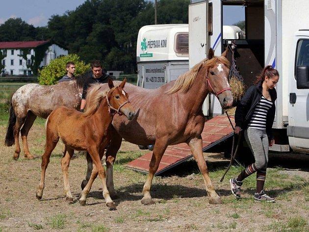 Týraní koně z Mělníka.