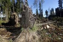 Polom po nedělní vichřici v polesí Huzová Lesů města Olomouce.