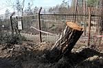 Zoologická zahrada na Svatém Kopečku u Olomouce poškozená vichřicemi.