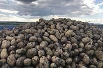 V Blatci startuje samosběr brambor. Zájemci nepotřebují motyky, farmáři hlízy nachystají na pole. 3. září 2020