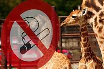 Zákaz kouření v olomoucké zoo. Ilustrační foto