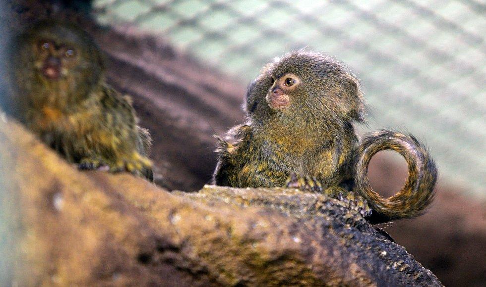 Uzavřená Zoo Olomouc na začátku února 2021