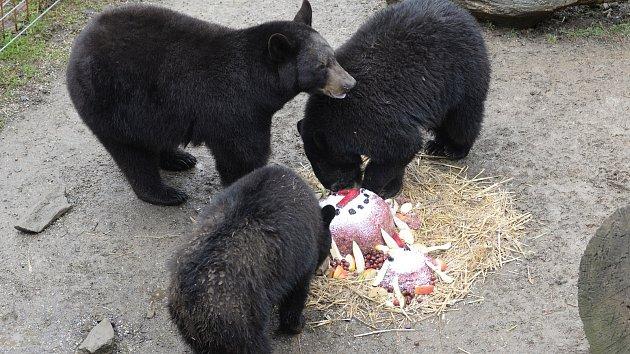 Medvíďata v olomoucké zoo oslavila první narozeniny