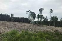 Holiny po řádění kůrovce či vichřice na Olomoucku. Ilustrační foto