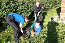 Strážníci chytali v zahradě mateřské školy srnu