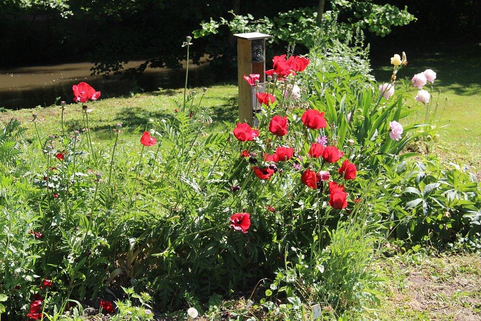 Botanická zahrada výstaviště Flora Olomouc a rozárium je během Víkendu otevřených zahrad přístupné od 9.30 do 18 hodin.