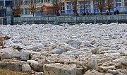 Únor 2012. Ledové kry ucpaly řeku Bečvu v Teplicích nad Bečvou.