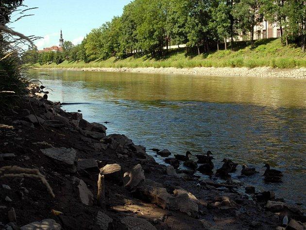 Kvůli čištění toku od velkých naplavenin snížili pracovníci Povodí Moravy hladinu řeky.