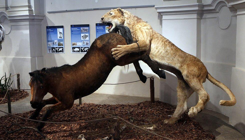 Výstava Giganti doby ledové 2 ve Vlastivědném muzeu vOlomouci