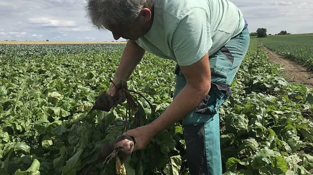 Ladislav Kašpar z Vojnic, místní část Těšetic, pěstuje zeleninu, kterou lidem nabídne k samosběru - za pár korun.