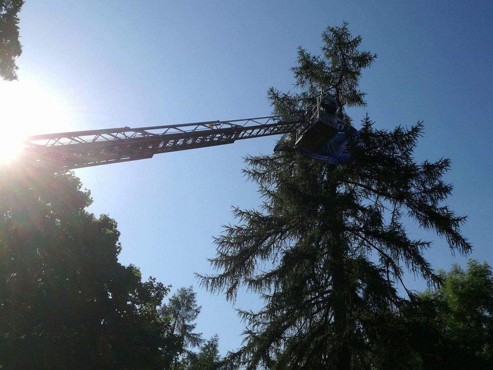 Slunečník z občerstvení v olomoucké zoo odletěl až do koruny vysokého stromu