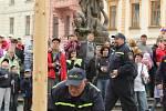 Kácení májky na Horním náměstí v Olomouci