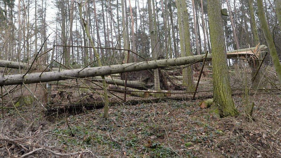 Výběh kozorožců sibiřských. Odstraňování následků vichru v olomoucké zoo - 27.3.2019