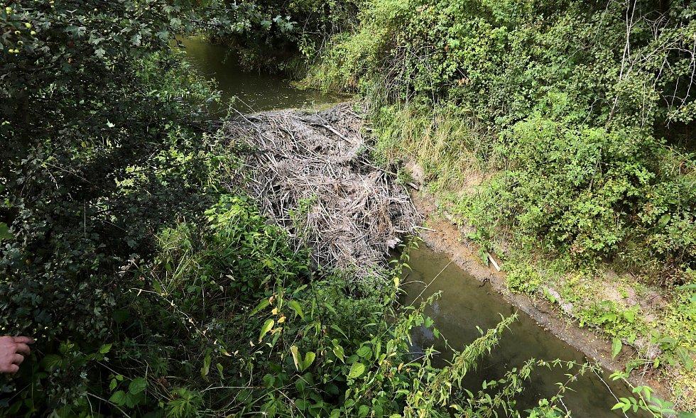Bobří hráz na Nemilance v létě 2013