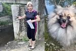 Chovatelka Jana Jahnová z Hluboček ukazuje, kde se objevil dobrman a zaútočil na jejího ročního špice (v koláži na archivním snímku vpravo) - ten napadení nepřežil