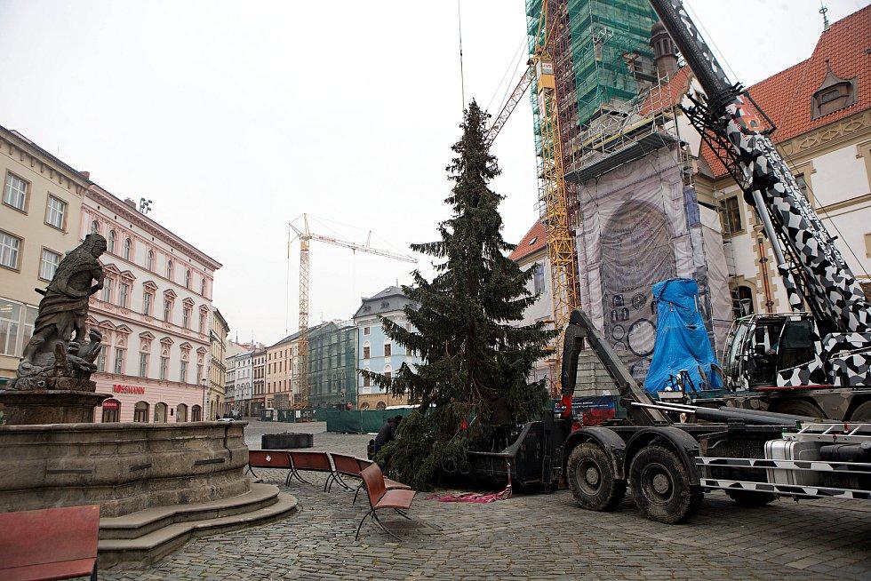 Kácení vánočního stromu v Olomouci, 8. ledna 2020