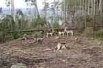 Následky vichru z 10. na 11. 3. 2019 v olomoucké zoo. Výběh jelenů sika