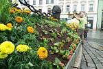 Instalace květinové výzdoby na Sloupu Nejsvětější Trojice na Horním náměstí v Olomouci. 10. června 2020