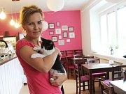 Kočičí kavárna CoffeeCat v centru Olomouce