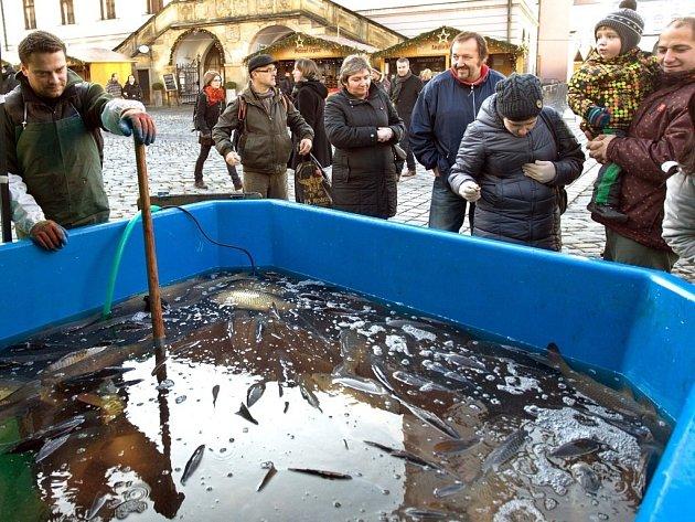 Prodej vánočních kaprů vcentru Olomouce