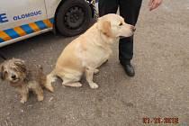 Olomoučtí strážníci během silvestrovského víkendu pomáhali několika zvířatům.