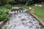 Ekologická havárie na říčce Blata. Ilustrační foto.