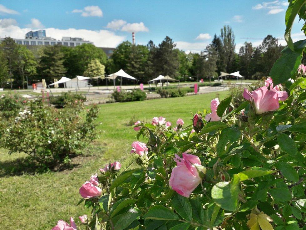 Výstava a festival Vyznání růžím probíhá v olomouckém rozáriu od pátku do neděle. V pátek je akce přístupná od 14 do 19 hodin, v sobotu od 9 do 19 hodin a v neděli od 9 do 17 hodin. Vstup je zdarma.