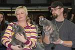 Mezinárodní výstava koček na olomouckém výstavišti.