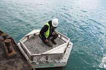 Ornitologové kroužkovali narozené rybáky na Troubeckém jezeře v Tovačově